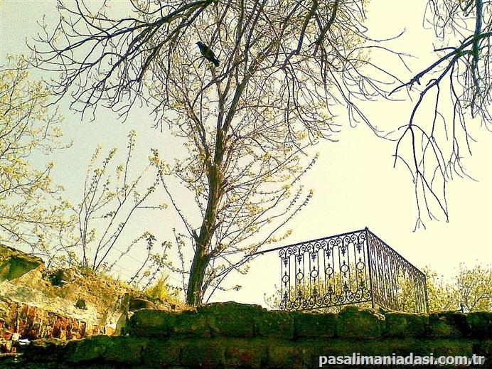 Paşalimanı Köyü'09...